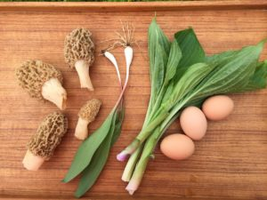 Morels and Ramps and Urui